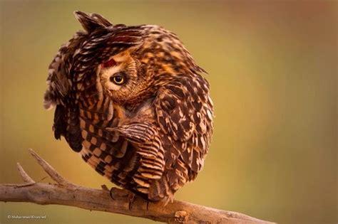 jepretan wildlife photography digital art