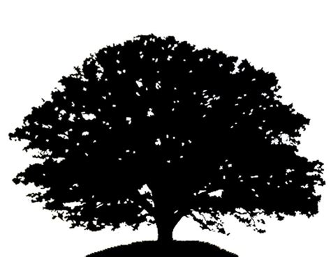 oak tree clipart black and white oak tree pictures clip 61