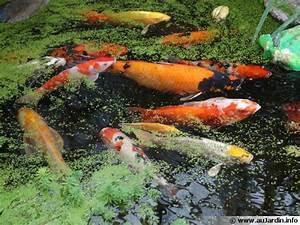 Bassin De Jardin Pour Poisson : bien choisir ses poissons pour le bassin ~ Premium-room.com Idées de Décoration