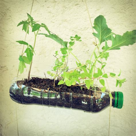 pflanzen bewässern pet flaschen pflanzen in pet flaschen 6 x wasser spender pflanzen bew sserung pet flaschen aufsatz ton