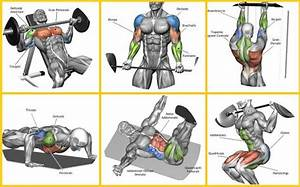 Top 7 Workout Routines For Building Muscle