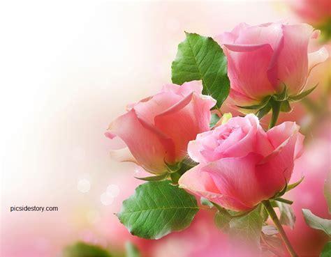 gambar bunga cantik indah pecinta kucing