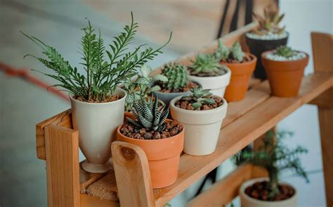 mediterranean house benefits of indoor gardening melbourne international