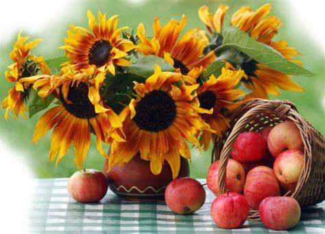 bisous en grec moderne tournesols fleurs fruits couleurs automne bon mardi