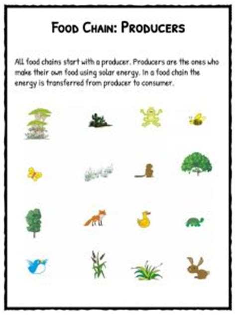 food chain worksheets  downloadable lesson resource