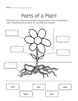 parts of a plant cut and paste activity by elizabeth 731 | original 3649552 1