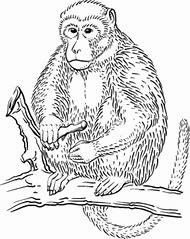 Rainforest Monkey Coloring Pages