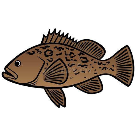 grouper fish cartoon vector fische barsch goliath kabeljauwvissen tandbaars vectorillustratie miniatus illustratie atlantic icon line water vissen