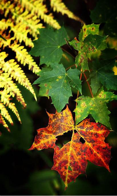 Mobile Wallpapers Background Nature Incredible Leaves Screen
