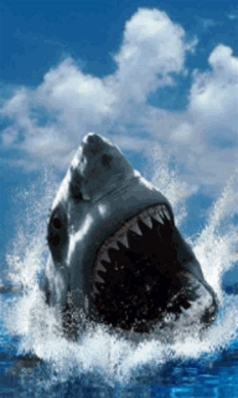 Animated Shark Wallpaper - shark screensavers and wallpaper wallpapersafari