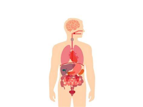 Diferencia entre Sistema y Aparato: El Cuerpo Humano