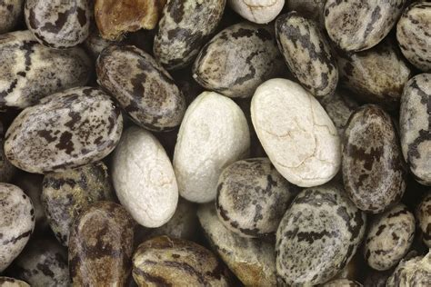 What Is Chia? Chia Seeds Nutrition