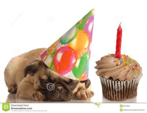 birthday puppy stock  image