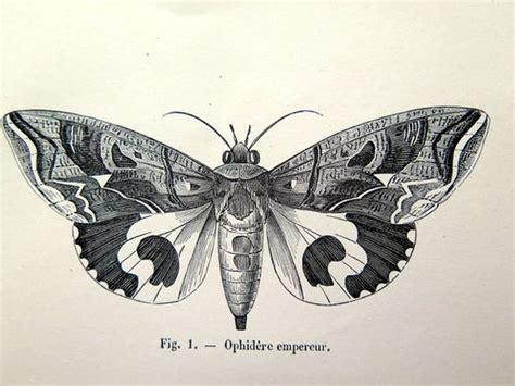 imprimer papillons papillons antique de  par