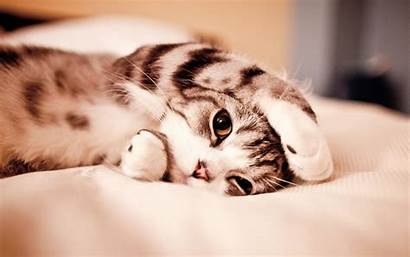 Funny Cats Wallpapers Cat Desktop