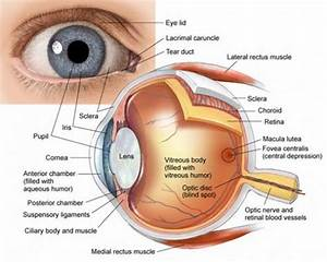 Human Eye  Anatomy  Parts And Structure
