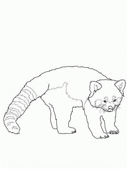 Coloring Panda Printable Clipart Bear Animal Line