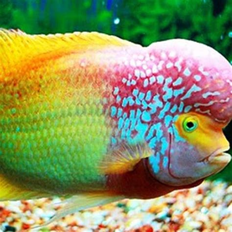 India's First Fish Hospital To Come Up In Kolkata By Mid 2015