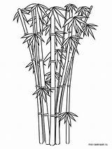 Bamboo Coloring Pages Tree Printable Sketch Colouring Drawing Template Shoot Plant Cartoon Drawings Colorful Sketches Trees Colors Raw 1000px 11kb sketch template