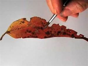 Helen's eucalyptus leaf painting tip 7 - YouTube