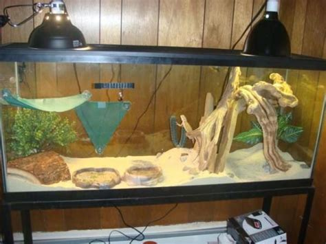 Bearded Tank Flooring by Need Help Finding Stuff For A Bearded Cage