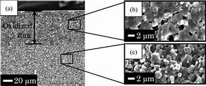 Sem Images Of Fractured Surface Of Ni  Al2o3