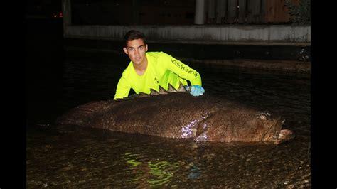 grouper goliath caught land monster huge rope