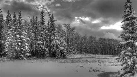 Black And White Winter Wallpapers (51 Wallpapers) Hd