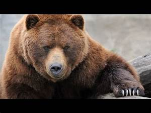Grizzly River - Grizzly Bears Nature Documentary - YouTube  Grizzly