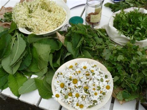 cuisiner les plantes sauvages cuisiner les plantes sauvages bien être au naturel