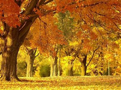 Scenery Autumn Wallpapers Fall Desktop Backgrounds Background