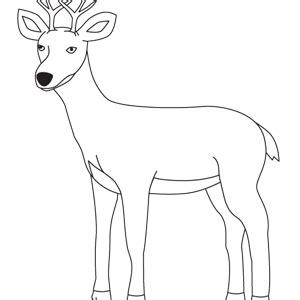 ciervo  dibujos de animales del campo  colorear