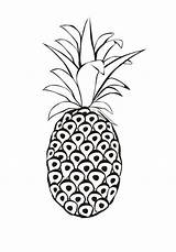 Pineapple Coloring Spanish Venezuela Pages Printable Clip sketch template