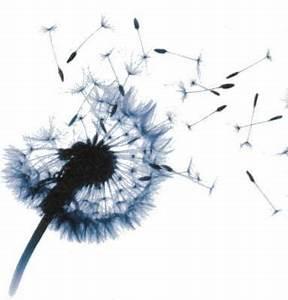 Bild Pusteblume Schwarz Weiß : welche gedanken verbindet ihr mit einer pusteblume assoziation ~ Bigdaddyawards.com Haus und Dekorationen