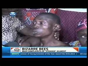 Bizarre bees attack man in Mombasa - YouTube