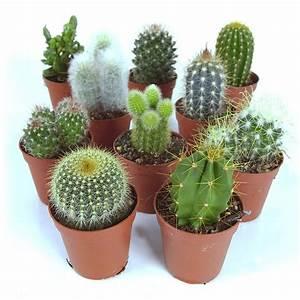 Pot A Cactus : cactus plants for indoors ~ Farleysfitness.com Idées de Décoration