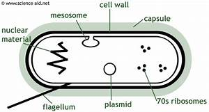 Cuboid Education Centre  Biology Gcse Aqa Revision Notes