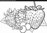 Coloring Berry Designlooter Fruits Vector Illustration 93kb 1600 sketch template