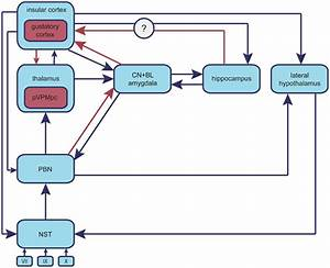 Frontiers | Molecular Mechanisms Underlying Memory ...