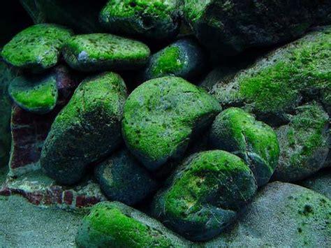 natural organic solutions  effective environmental
