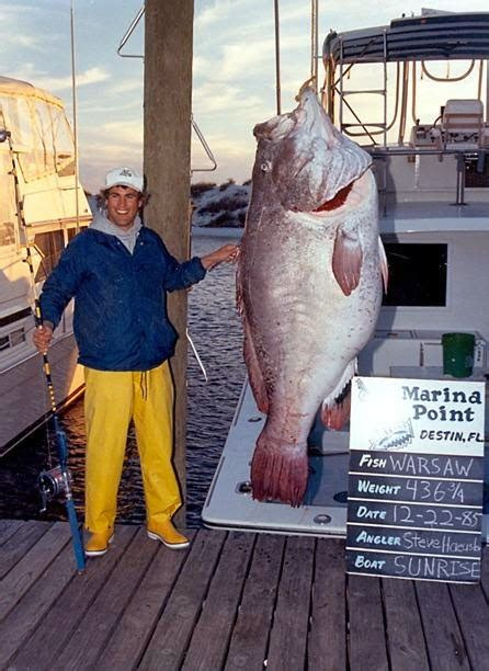 grouper warsaw record fish florida caught nigritus epinephelus gulf lb fishing biggest giant largest freshwater fishes mexico ever records destin