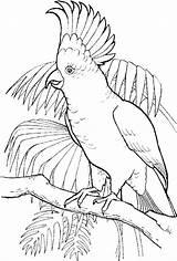 Coloring Parrot Conure Crochet Animal Birds Bird Sun Drawings Outline Jungle Drawing Adult Pencil Acessar Papou sketch template