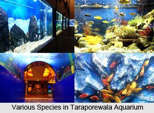 taraporewala aquarium mumbai maharashtra