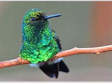 Exotische Tierwelt auf Curacao Apartments Curacao
