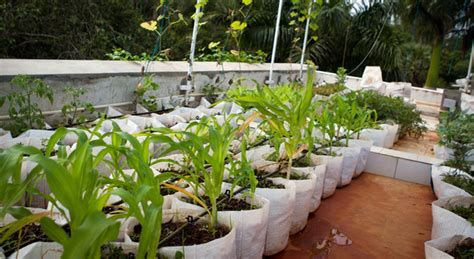Rooftop Garden Container 01  Auroville Collaborative