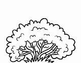 Coloring Bush Shrub Pages Bushes Clip Google Printable Coloringcrew Colorear Arbustos Getcolorings Guardado Desde sketch template