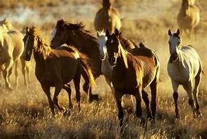 Australische Wildpferde Symbol Ungestörter Freiheit Und