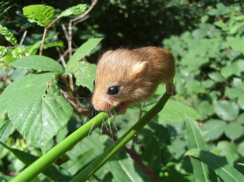 Spring Search for Small Mammals Worcestershire Mammal Group