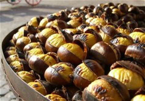 sweet chestnuts gathering peeling roasting  cooking
