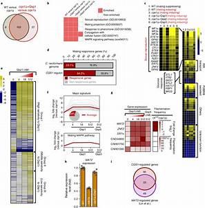 Qsp1 Mediates Mating Response Through The Control Of Mat2